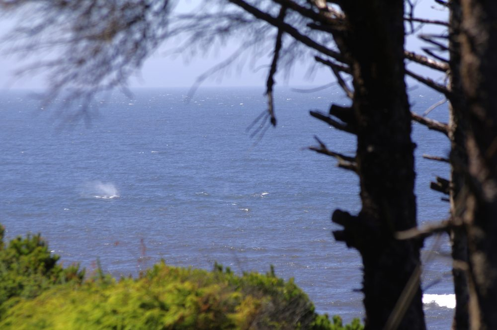 Where in the World is Yachats, Oregon?