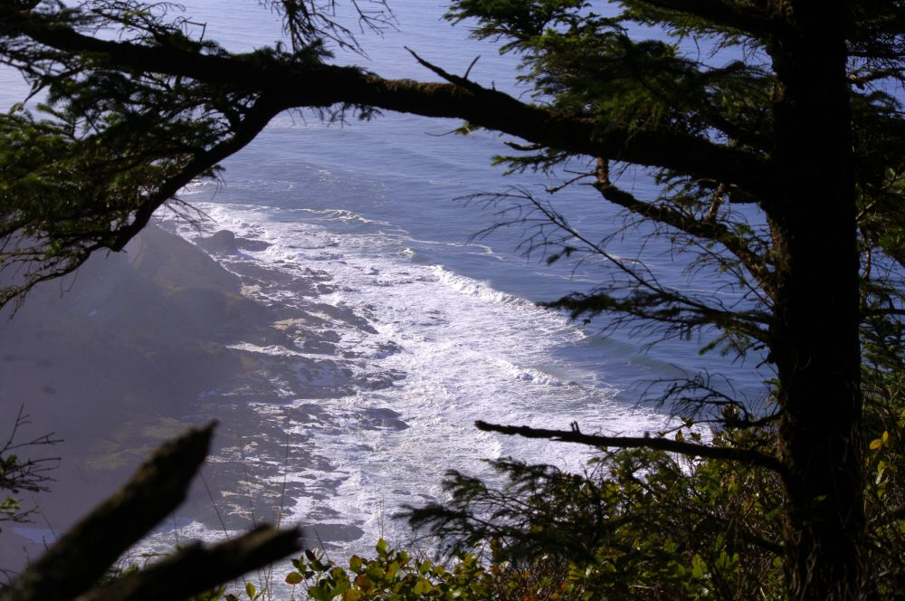 Another Great Reason to Visit the Central Oregon Coast